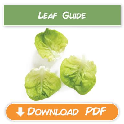 Leaf-Guide