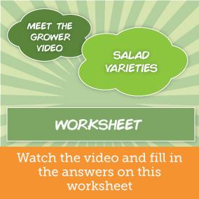 salad-varieties